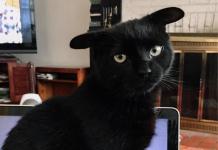 Кот з незвичайними вухами