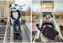 Панда на візку