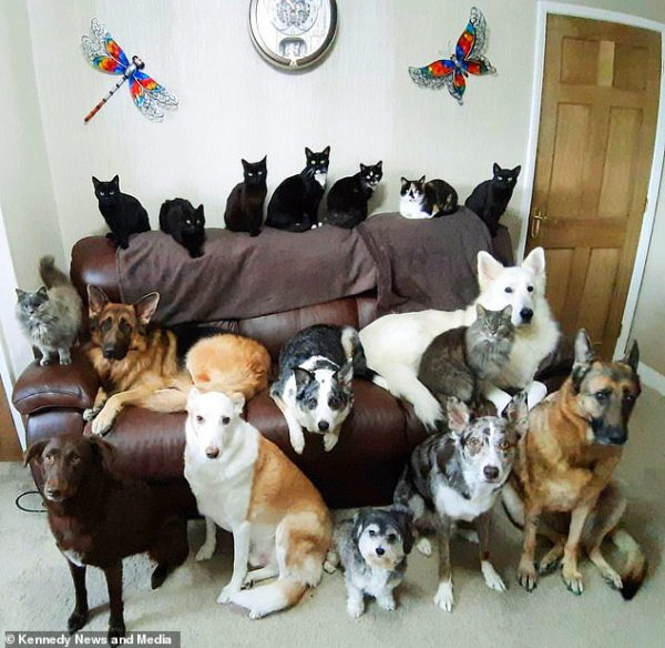 Усі домашні тварини разом