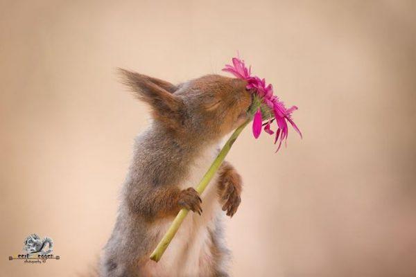 Животное нюхает цветок