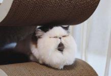 Кішка Зузу