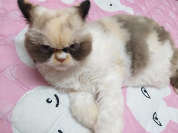 Кішка по кличці Мяу-мяу