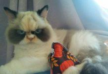 Зла кішка Мяу-Мяу