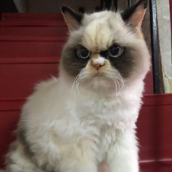 Кішка-понеділок