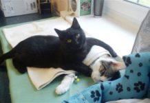Кіт-доглядальниця Радаменес
