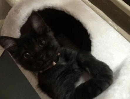 Котенок полюбил новый дом