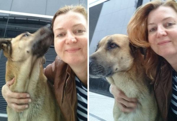 Теперь Рубио стал домашним псом
