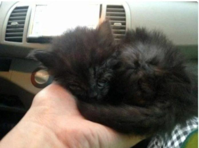 Меленький кот, которого подобрали на дороге