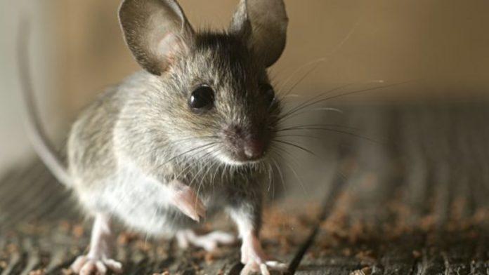 Хантавирус - заболевание животных