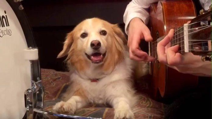 Пес-барабанщик