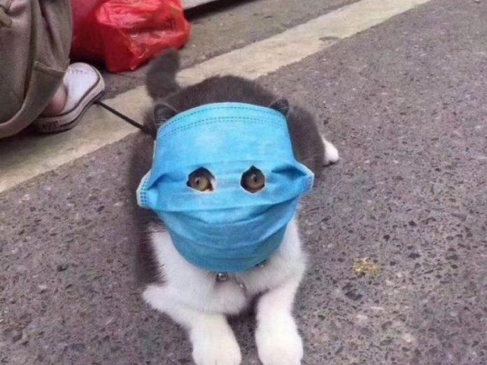 Поражает ли коронавирус животных?