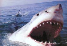 Белая акула нападает
