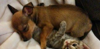 Щеня та кошеня завжди разом