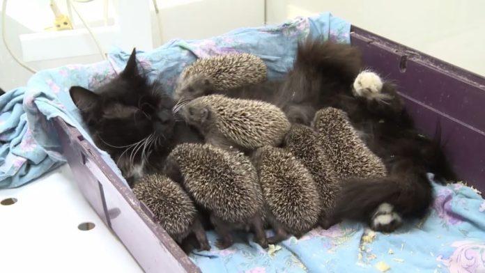 Діти, яких прийняла кішка