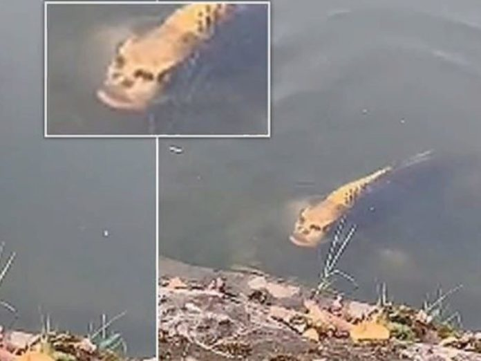 Странное существо: рыба с человеческим лицом