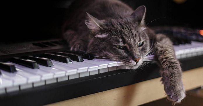 Музыка благотворно влияет на кошек