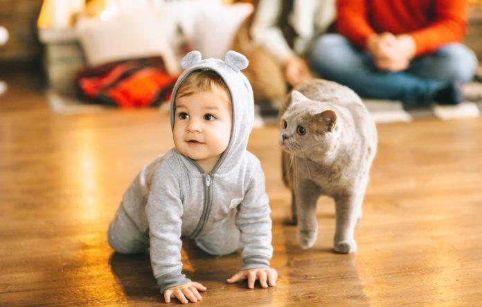 Кот спас ребенка