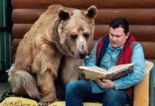 Ведмідь Степан