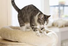 Кот топчет лапами