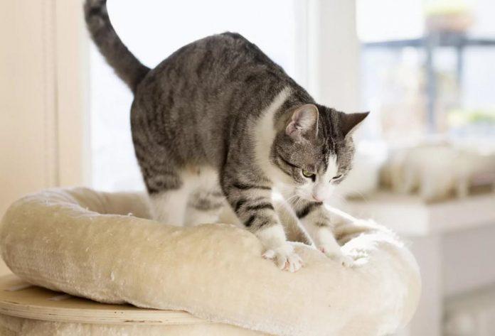 Кот топче лапами
