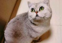 Кішка з Ухань вижила під час карантину