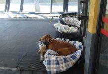 Бездомних собак поселили на автовокзалі