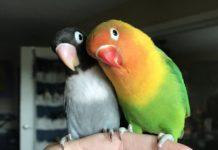 Красиві папуги