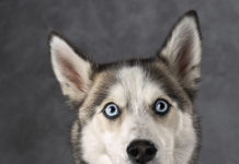 Пес сильно здивувався і забув про язик