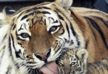 Мами завжди люблять своїх дітей