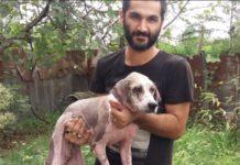 Чоловік врятував собаку