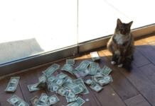Кот і гроші