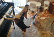 Пес грає на піаніно