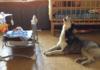 Собака успокаивает ребенка