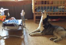 Собака заспокоює дитину