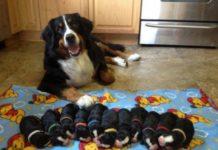 Собака теж вміє бути мамою