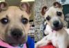 Собака с необычными ушами
