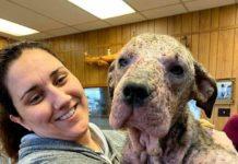 Жінка вилікувала хвору собаку
