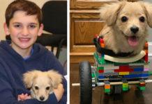 Собака на інвалідному візку