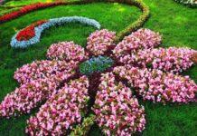 Квіти піднімають настрій