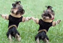 Два відео-кліпу танців собак