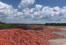 Морква гниє на полі
