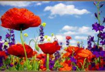 25 травня - Єпіфанов день
