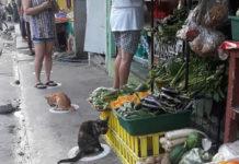 Кішки дотримуються дистанції при карантині