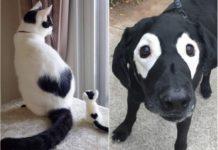 Тварини з незвичайним забарвленням