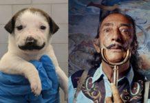 Собака з вусами схожа на художника Сальвадора Далі