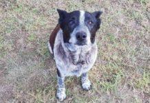 Глухий пес врятував дівчинку