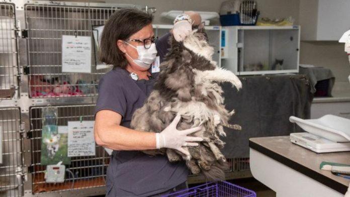 Ветеринари підстригли кішку
