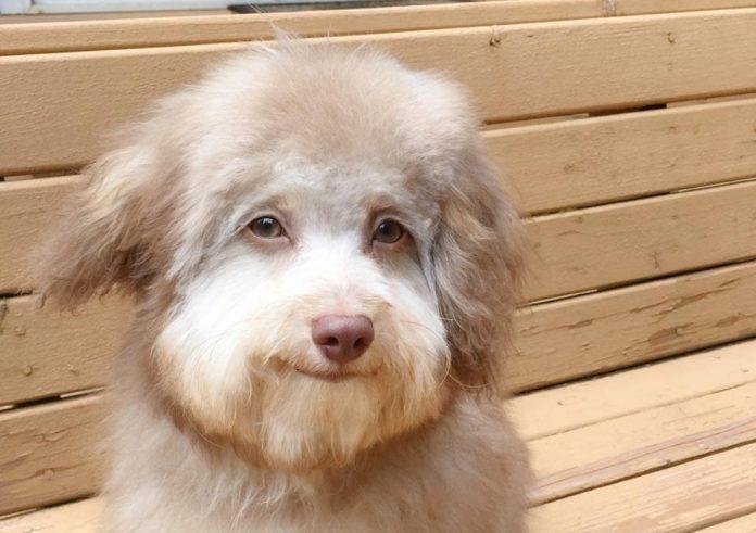Мордашка собаки напоминает человеческое лицо
