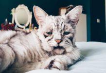 Кіт Тобі