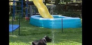 Смышленая собака